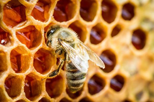 Umweltschutz und Nachhaltigkeit Bienen Living Hotels