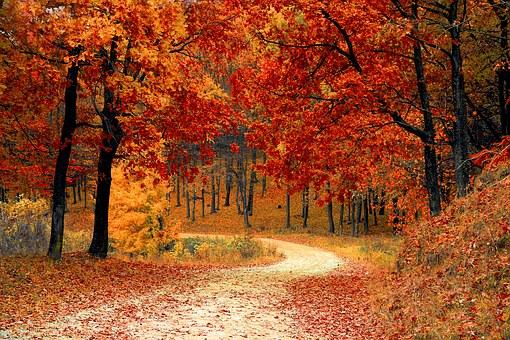 Rot Oranger Wald Herbst in Düsseldorf