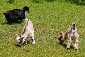 petting-zoo-1411440_1920